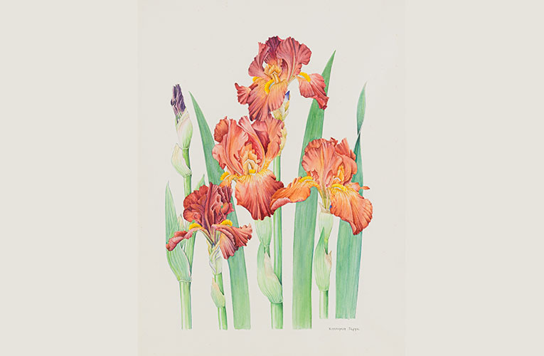 Botanical paintings a focus of Strauss & Co's June online auction sale